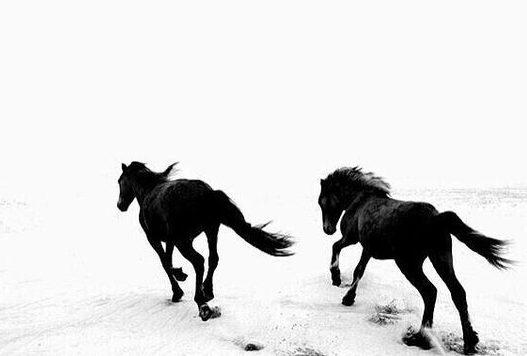 caballos y nieve