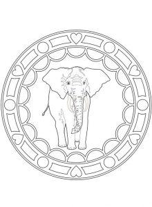 mandala elefante solo