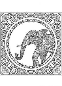 mandala elefante