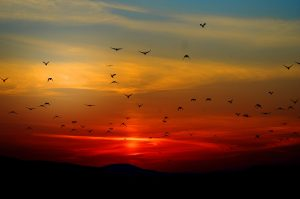 sunset and birds