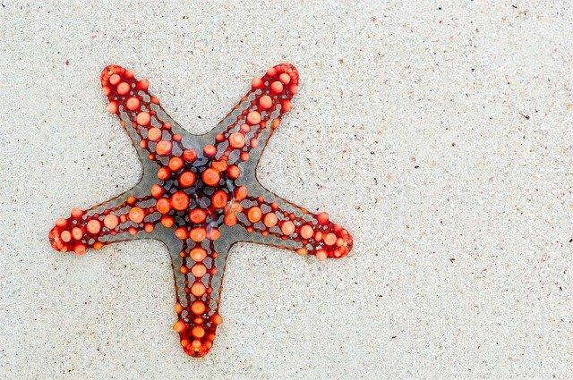 forma de estrella