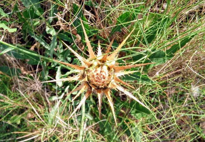 Flor con forma de estrella y mandala