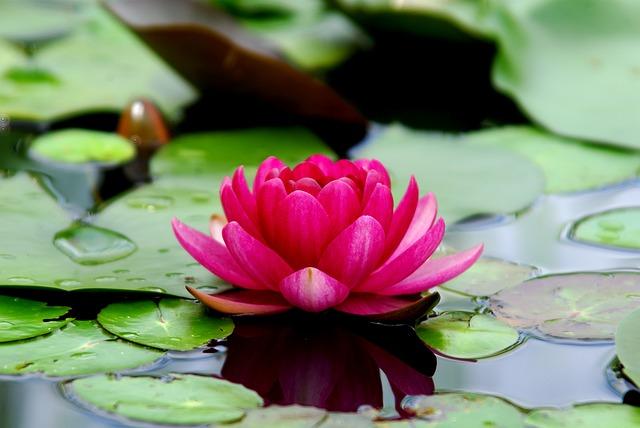 Significado y origen de la Flor de Loto