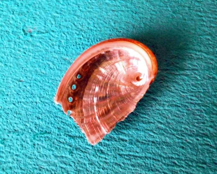 Espiral en una concha. Geometría Sagrada