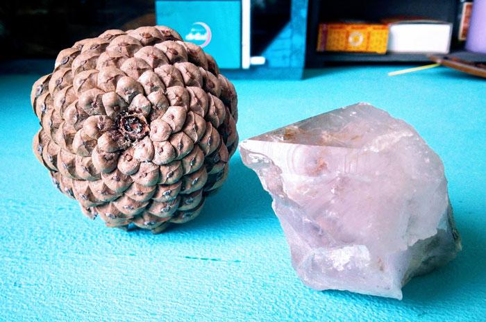 Geometría sagrada en minerales y vegetales