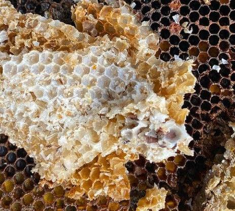 Geometría sagrada en panales de abejas